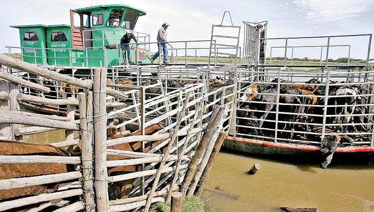 barcazas vacas
