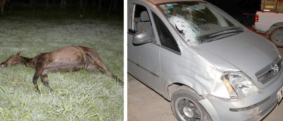 accidente caballo auto