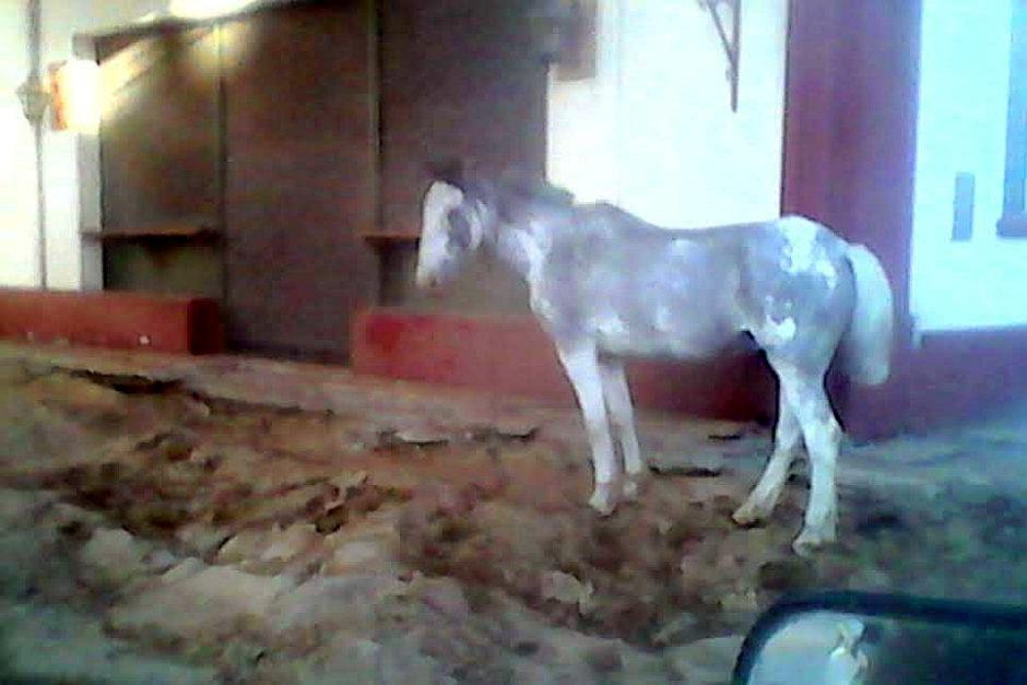caballo-02