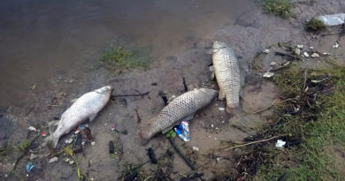 peces-muertos