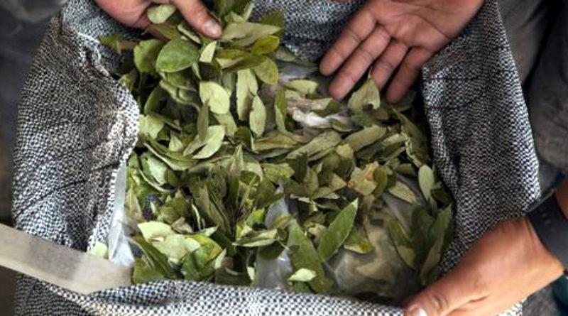 Ruta 9: Secuestraron 142 kg. de hojas de coca en un mico de larga distancia
