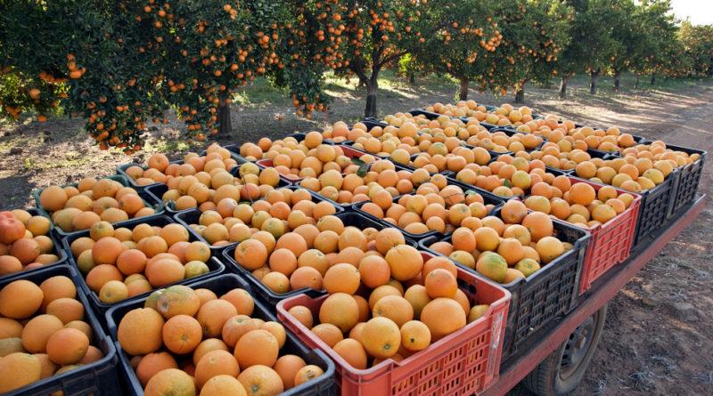 naranja-produccion