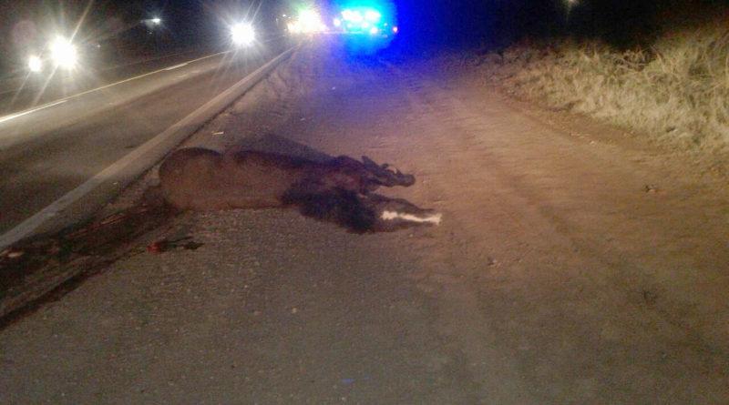 accidente-caballo-02