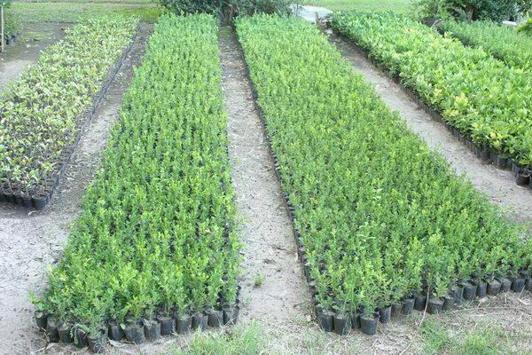 venta-de-arboles-y-arbustos-01