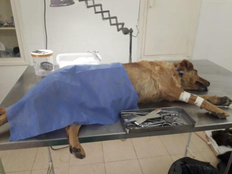 departamento-canino-2