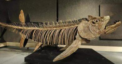 [Nacionales] Patagonia: hallaron el fósil de un pez gigante